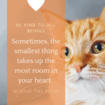 quotes about kindness for kids